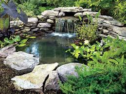 how to build a pond to make your garden a wildlife haven