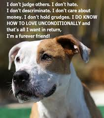 Quotes About Dogs Love Awesome 48 Dog Quotes About Love And Compassion SpartaDog Blog