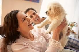 before you bring home your furry friend take time to research plan and prepare here s some helpful pointers to keep in mind as you go through the process