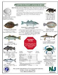 Crab Size Chart Nj Nj Salt Fish Regshistory