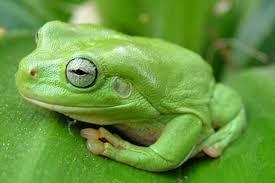 garden frogs. Plain Garden Inside Garden Frogs Domain