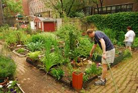 community gardens a short guide to getting started