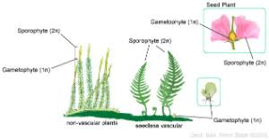 Venn Diagram Of Vascular And Nonvascular Plants Plants Iii Seed Plants Non Flowering And Flowering