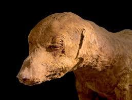 Risultati immagini per cane da caccia mummificato valle dei re