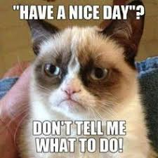 Fussy Feline on Pinterest | Grumpy Cat, Meme and Party Rock via Relatably.com