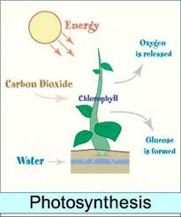 Photosynthesis Alphabet Chart Photosynthesis Chart Photosynthesis Photosynthesis