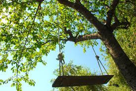 Tree Swings Tree Swings And Cherries Strada Toscana