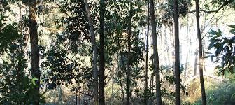 Resultado de imagen para bosques uruguayos