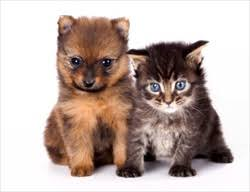 kittens and puppies. Contemporary And Inside Kittens And Puppies
