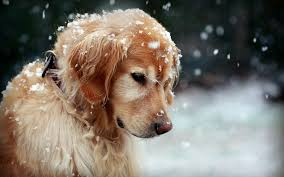 46 Dog in winter - desktop wallpaper ...