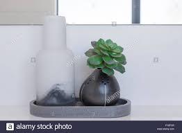 Luxuriöses Badezimmer Dekoration Grün Sukkulente Pflanze Im