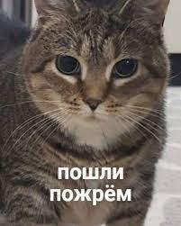 Приколы для даунов :: кошка :: разное / картинки, гифки, прикольные  комиксы, интересные статьи по теме.