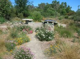 Small Picture Native Plant Garden Design Elegant An Example Of A Design Using