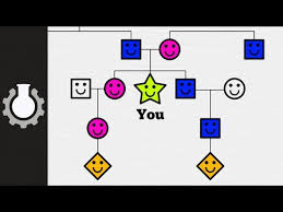 Your Family Tree Explained Cgp Grey