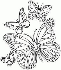 Coloriage Papillon Imprimer Gratuit Coloriages Store
