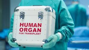 Αποτέλεσμα εικόνας για δωρεα οργανων