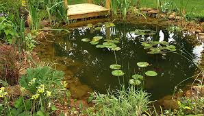 Small Picture Garden Design Berkshire Natural Pond Planting Patio Herb