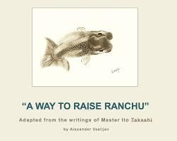 High Ranchu A Way To Raise Ranchu Raising And Grooming Fry