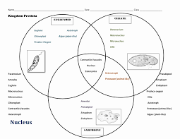 Venn Diagram Plant Cell And Animal Cell Plant Vs Animal Cell Venn Diagram Beautiful Venn Diagram Plant Cell