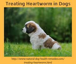 natural heartworm treatment. What Is Heartworm? Treating Heartworm In Dogs Natural Treatment M