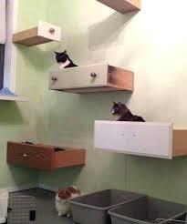Corner Cat Shelves Wall Mounted Cat Shelf The DOUBLE WAVE Inside Shelves Prepare 100 39