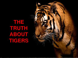 extinction of tigers  truth about tigers<br >the truth