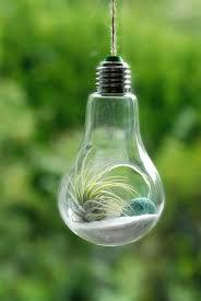 lightbulb air plant hanging terrarium