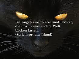 Coole Katzenbilder Mit Sprüchen Teil 3 Alles Catde
