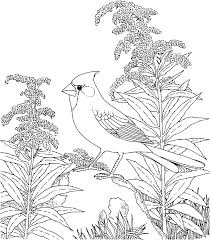 Winter Coloring Pages For Adults - Coloring Home