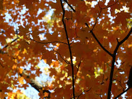 Essi Light Fall Leaves Olympus Digital Camera Essi Heart Flickr
