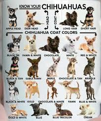 Chihuahua Color Chart Chihuahua Chart Chihuahua Puppies Chihuahua Dogs Baby