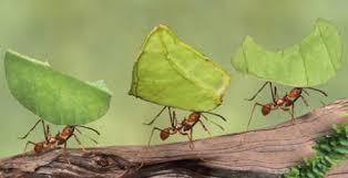 """Résultat de recherche d'images pour """"colonie de fourmis:images et photos gratuites"""""""
