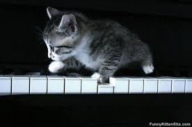 cute kittens sleeping on pianos. Fine Cute Cute Kittens Sleeping On Pianos Download Throughout