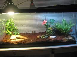 Turtle Tank Decor Aquariums And Sulcatas Tortoise Forum