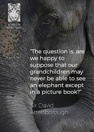 Our Favourite Sir David Attenborough Quotes Tears For Tigers