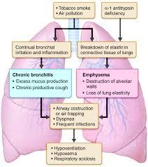 Pathophysiology Of Emphysema Flow Chart Science Moderate Complex