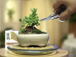bonsai tree for office. Amazon.com : Mini Indoor Bonsai Tree For Home Or Office Desk By HooTee Ice Plant Plants Grocery \u0026 Gourmet Food I