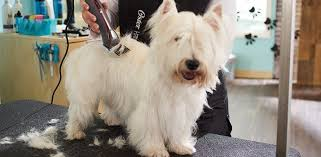 top 7 best dog clippers grooming