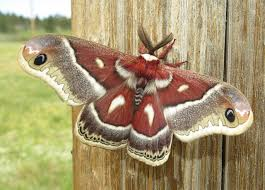 What Did Moths Do Before Lights Turn On Your Porch Light And Celebrate National Moth Week