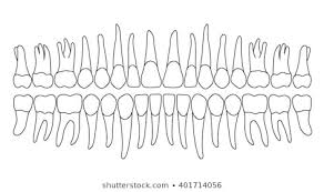 Dental Chart Images Stock Photos Vectors Shutterstock