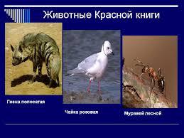 Доклад красная книга животные hocxdce доклад животные красная книга