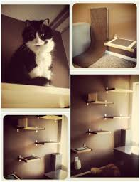 Diy cat box cabinet evanandkatelyncom Ikea Hack Treat Puzzle Todays Bride 10 Purrfect Projects For The Cat Lovers Of The World