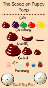 Bowel Movement Consistency Chart 79 Abiding Poop Chart What Does It Mean