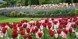 garden com. Fine Garden In Garden Com A