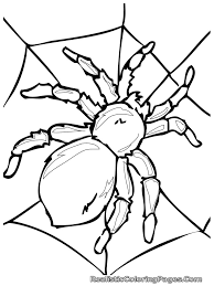 insect coloring pages for kindergarten realistic printable insects