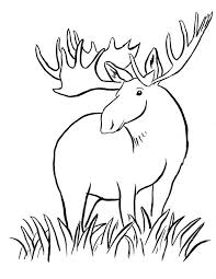 Small Picture Moose Coloring Page Samantha Bell