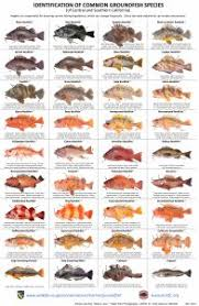 Rockfish Identification Chart Fish Id Recfin