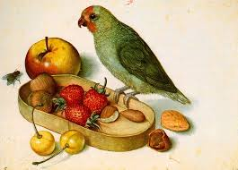 still life with pygmy parrot