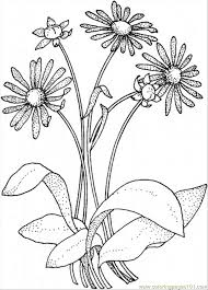 Small Picture Daisy 8 Coloring Page Free Flowers Coloring Pages