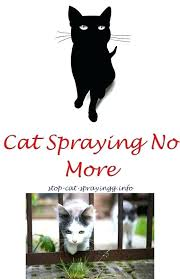 get rid of cat urine smell how to get cat urine smell out cat urine marking